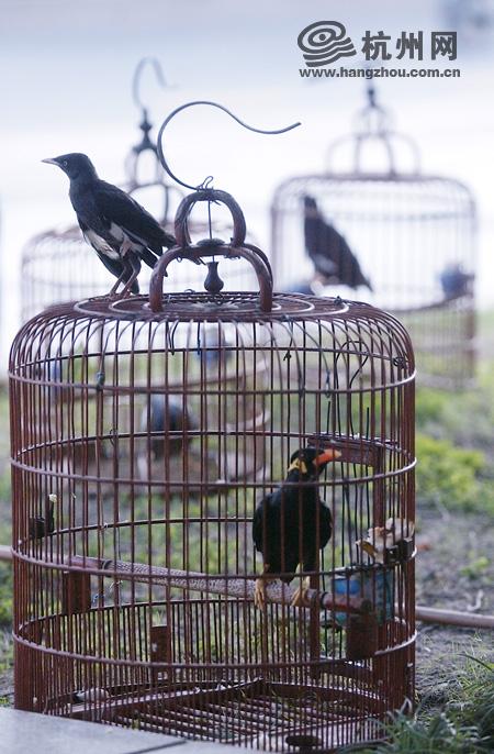 所在位置:笼子里的鸟 - 笼子里的鸟