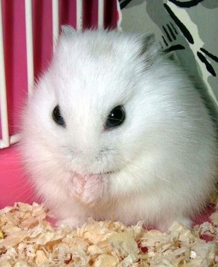 最可爱最萌兔子头像