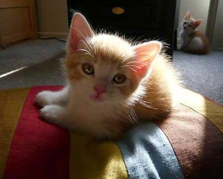 >>本页  网友跟帖: 绿茶笑:楼主的猫咪可爱的.