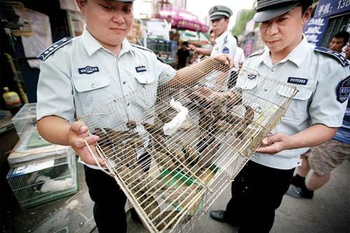 在一花鸟市场,执法人员将查处的麻雀当场放生