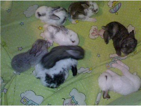可爱兔宝宝睁眼啦 还是混血儿呢[图]