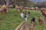 侏罗纪公园3风暴影视